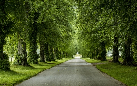 Tree Alley - avenue, road, alley, trees