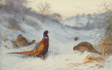 Pheasant in the snow - archibald thorburn, pheasant, snow, bird, fazan, pasari, winter, iarna