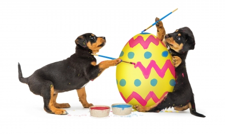 :D - animal, card, puppy, dog, yellow, caine, black, easter, egg, funny, pink, couple