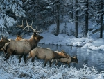 Deers in winter by Persis Clayton Weirs