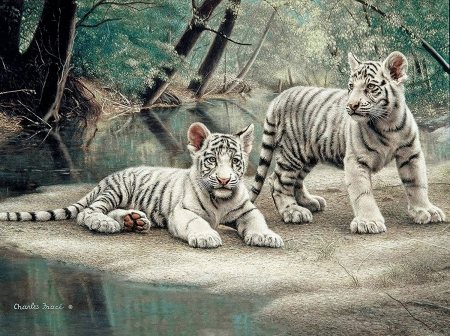 White tiger cubs - charles frace, painting, cub, tiger, white, animal, couple, art, cute, pictura