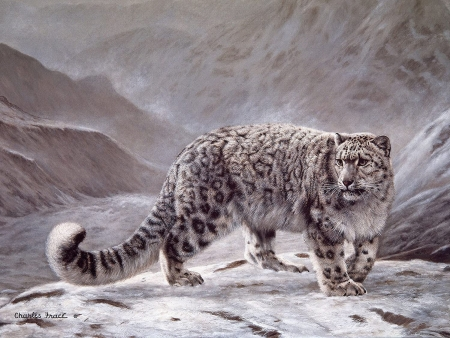 Snow Leopard - art, charles frace, painting, pictura, snow leopard, winter, iarna, animal