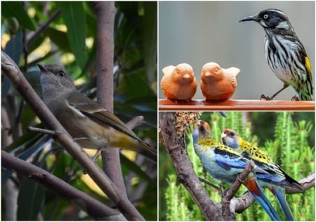 BIRD COLLAGE - BIRD, NATURE, COLLAGE, IMAGE