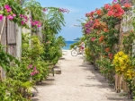 Flower Path to Sea
