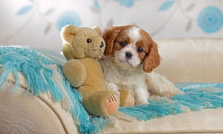 Sweet Dog and Teddy - teddy bear, Dogs, sweet, cute, Photography, adorable