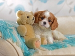 Sweet Dog and Teddy