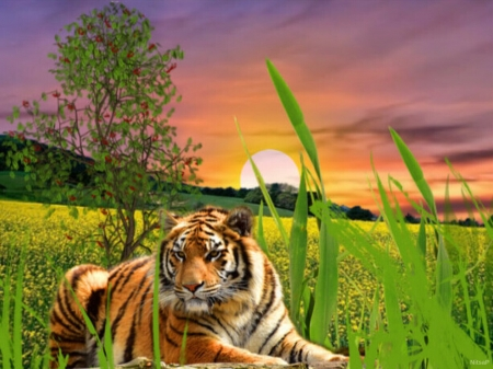 A tiger in the sunset. - tree, sunset, tiger, grass