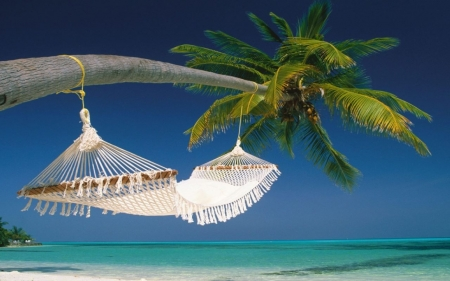 My Dream Vacation - beach, huts, Maldives, island, tropical, hammock, sea, palm tree, trees