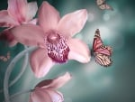 Butterflies on orchids