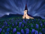 Church in Lupines Flowers