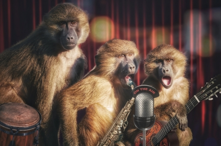 :D - trio, funny, creative, singer, animal, primate, band, maimuta, monkey, microphone, fantasy