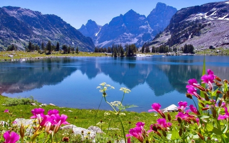 Jenny Lake, Grand Tetons, Wyoming - flowers, water, reflections, mountains, sky