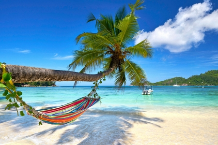 Hammock on Seychelles Beach - sky, sea, coconut, palms, clouds