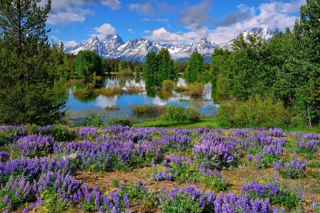 Spring in Grand Tetons, Wyoming