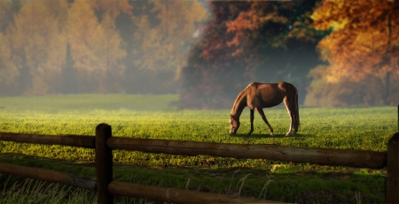 Autumnal - fence, grass, grazing, pasture, Autumn, horse, trees