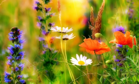 Wildflowers - Spring, nature, field, wildflowers, colorful