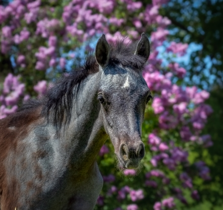 Foal - cal, cute, flower, foal, manz, horse, pink, baby, animal