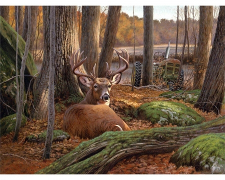 Where Sleeping Deer Lie - forest, antlers, male, green, nature, derr, trees