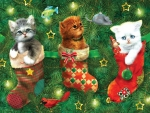 Kittens in a Stocking