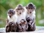 The Macaque Group Picture