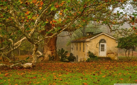 autumn fall - big tree, leaves, autumn, old house
