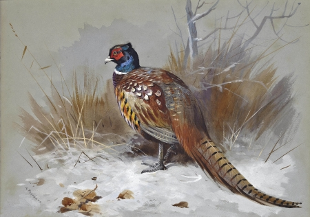A pheasant in a landscape - pretty, brown, bird, snow, pheasant, colors, winter, landscape, HD