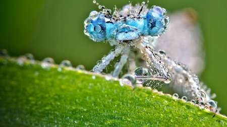 Fresh spring rain - insects, wild animals, animals, drops, spring, photography, wallpaper, macro, wild, wildlife, dragonfly, nature