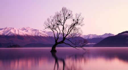 Lonely tree in the purple lights - reflection, landscape, scene, lake, dawn, dusk, sunset, trees, wallpaper, nature, sunrise