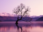 Lonely tree in the purple lights