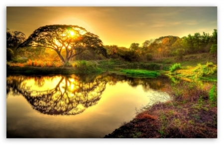 wild sunrise - sunrise, trees, plants, lake