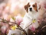 Dog in Magnolia