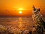 Sunset Owl