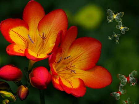 Freesias - butterfly, freesia, red, green, yellow, spring