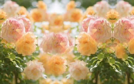 Roses - yellow, flower, green, rose