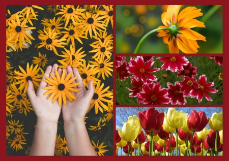 Pretty flowers - collage - pretty, red, hands, warm, orange, roy, HD, floral, collage