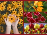 Pretty flowers - collage