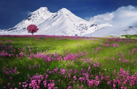 Beautiful Nature - field, mountain, photography, snow, beauty, flowers, nature