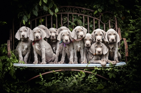 Puppies - dog, puppy, cute, bench, caine, animal