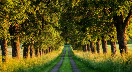 Beautiful country  road - path, summer, nature, trees, country, road, landscape, scene, wallpaper