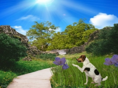 Nature - Landscape, nature, grass, dog, purple flowers