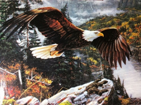 High Flying Wings - river, trees, mountains, fall, colors, eagle