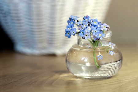 Forget-Me-Not - flower, glass, bottle, jar, forget me not