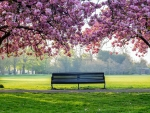 Cherry Blossom Park Bench