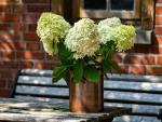 Hydrangeas on Table