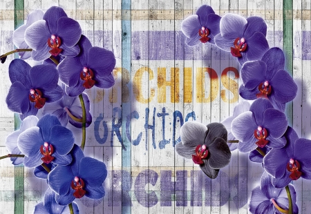 Beautiful orchids - flowers, orchids, beautiful, background