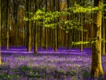 Purple lavender in forest