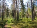 Forest Path in Latvia