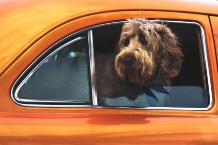 :) - vara, window, orange, car, summer, caine, dog