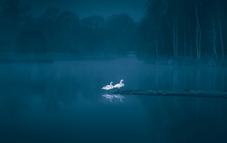 ♥ - water, bird, pasari, lebada, swan, blue, couple, lake, minimalism