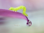 The Little Caterpillar and the water drop by Rina Barbieri